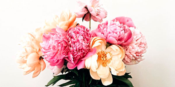 flores-beauty-party